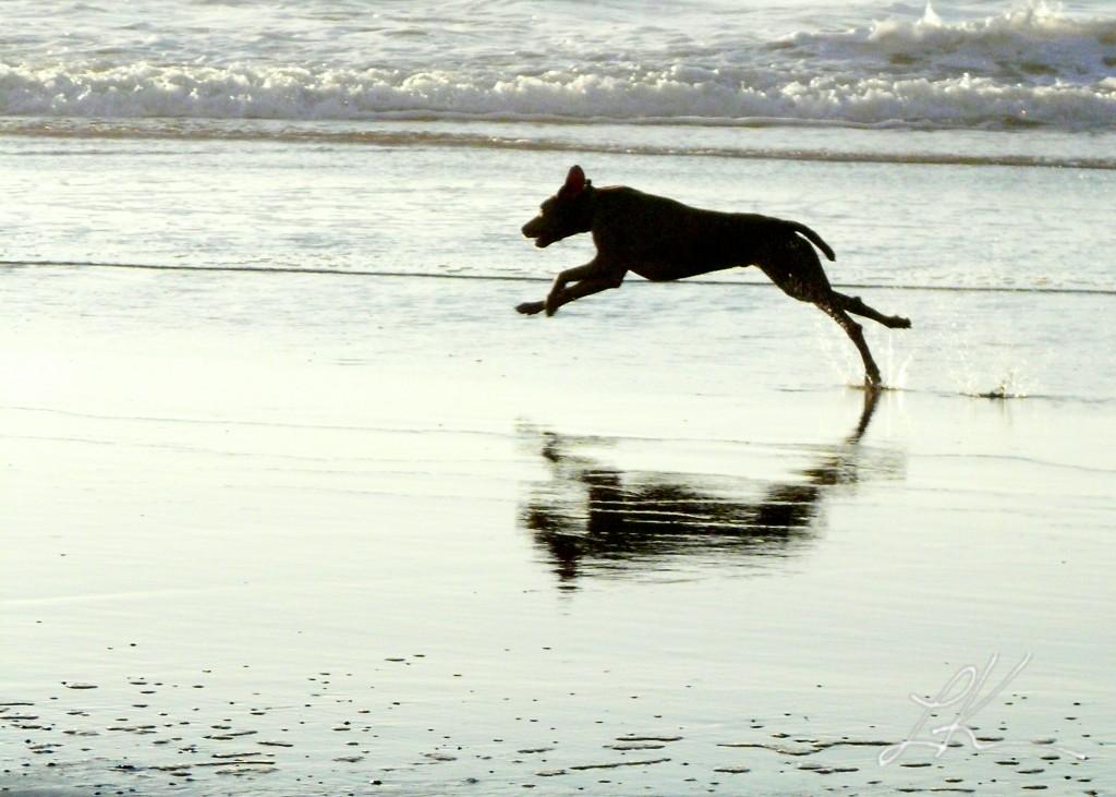Photo: Dog running on beach.