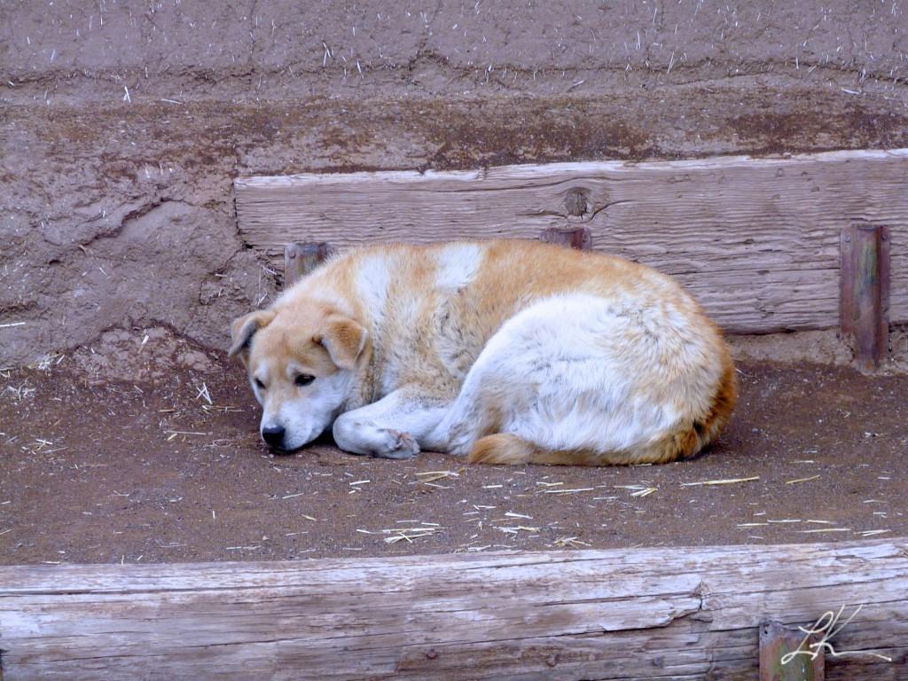 Photo: Dog lying alone on the ground.